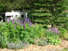 purplegarden.jpg