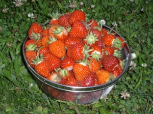 Just picked Strawberries
