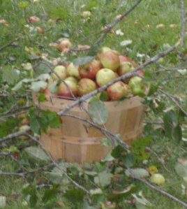 Find a bushel of fresh apples...organically grown of course