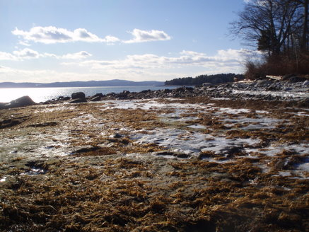 Ice on the seagrass meadow