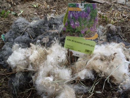 Mohair scraps for mulch...who woulda thunk it?