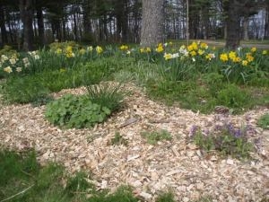 Fresh wood chips on one garden