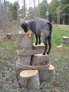 Goat structures to be built