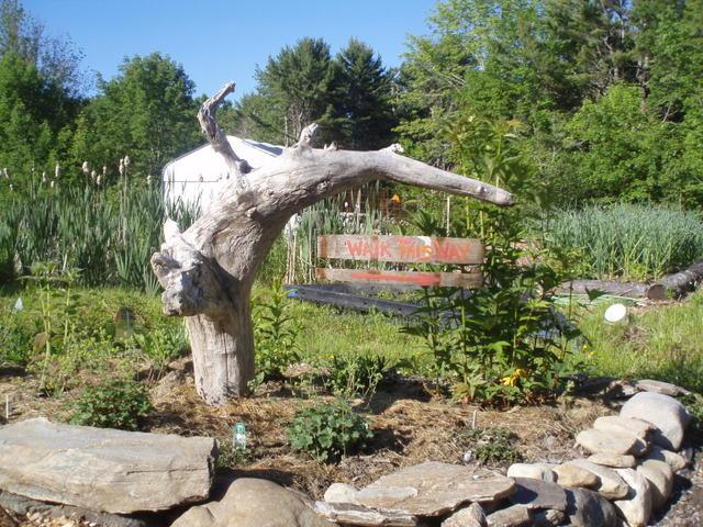 Walk this way through Steve's vegetable garden