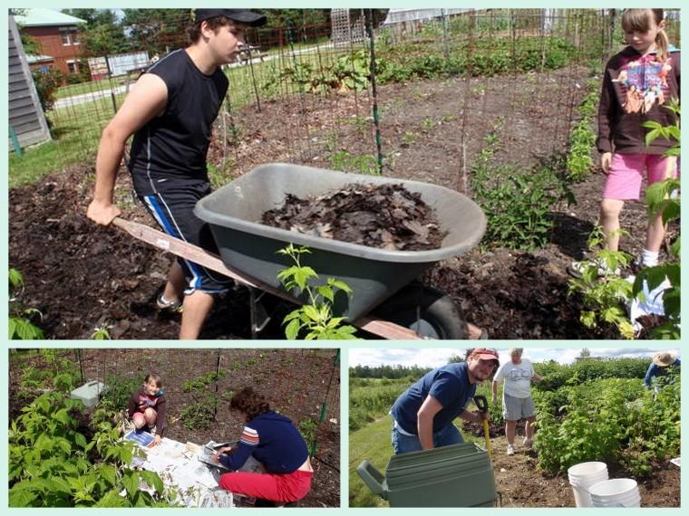 A garden lesson in the summer sun