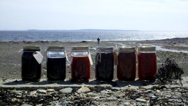 Jars of natural dye, curing in the sun...red cabbage, yellow onion, apple bark & rosemary