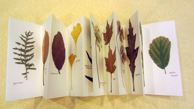 GSantner_Accordion-BotanicaOpen