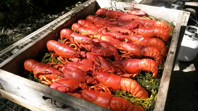 We hosted our final lobsterbake this weekend...it was an honor to participate in the memorial weekend of a beloved guest...so many memories