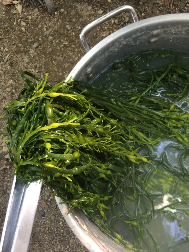 rockweed, maine, fresh, local